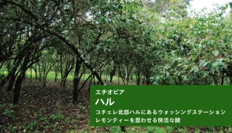 20170608_haru_news